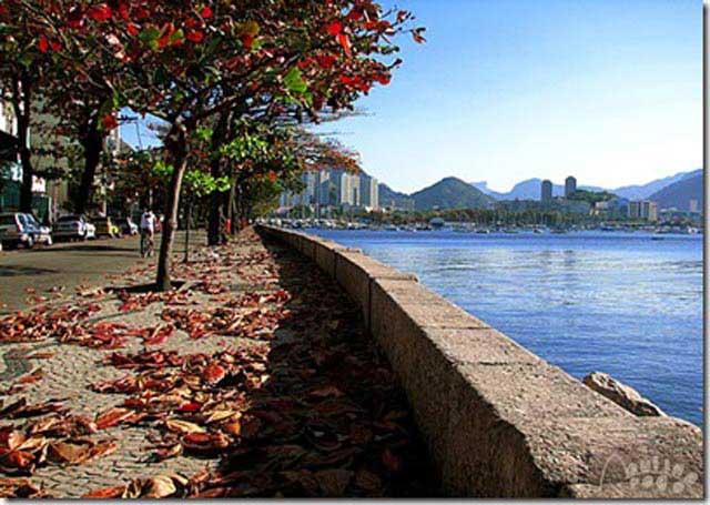 Resultado de imagem para OUTONO NO RIO DE JANEIRO